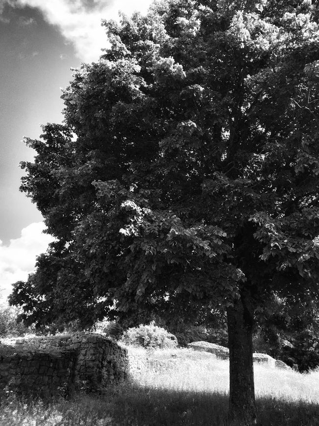 Tree photography Tree Photography Tree Sunny Day Enjoying Life Enjoying The Sun Discovering Nature Summer Summer Views Blackandwhite Photography Blackandwhite IPhoneography Showcase July EyeEm Nature Lover Tadaa Community Switzerland HDR Clouds And Sky