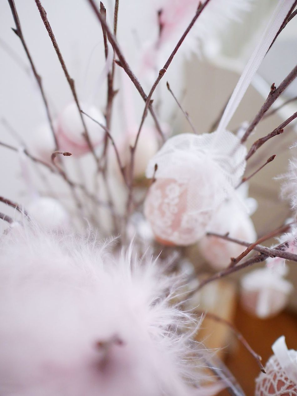 Nature Fragility Softness White Color Petal No People Freshness Day Textured  Close-up Feather  Feathers Birch Easter Pastel Colors