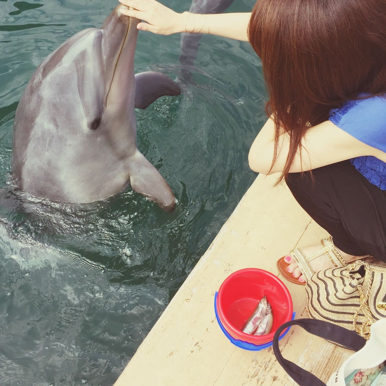 Dolphins 和歌山県