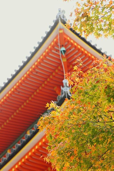 Kyoto*Japan Autumn Autumn Leaves Kyoto Japan KiyomizuTemple Kiyomizu-dera 京都 Fall 日本 清水寺 Capture The Moment