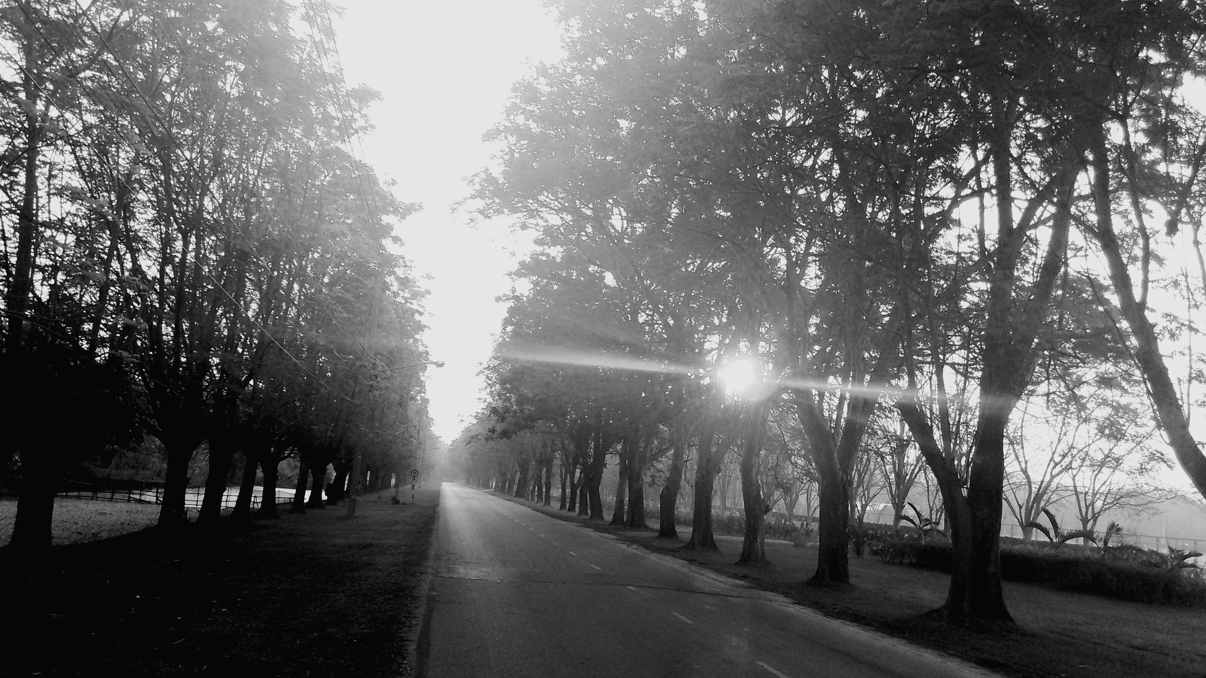 the way forward, diminishing perspective, tree, road, vanishing point, transportation, sun, sunlight, tranquility, treelined, sunbeam, country road, empty road, nature, street, tranquil scene, lens flare, sky, road marking, silhouette