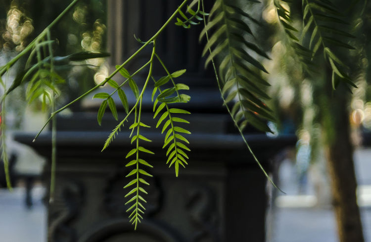 Urban plants City Tree Close-up Day Focus On Foreground Green Color Growth Leaf Nature No People Outdoors Plant Tree Urban Greenery Urban Jungle Urban Plants