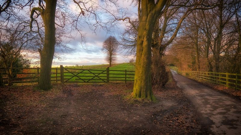 The gate... or the path... Beauty In Nature Sky Tree No People Outdoors Autumn Colors Anglezarke LumixG80 Autumn Leaves Landscape_Collection Tranquil Scene Landscape_photography Streamzoofamily Taking Photos Malephotographerofthemonth Landscape EyeEm Best Shots Colourful WoodLand Autumn Scenics Foliage Rugged Countryside Nature