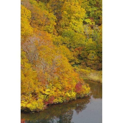 フォロワーさんの写真を見て影響されて、鳥海山の湯ノ台登山口付近で紅葉を観賞してきました。こちらは道路から見下ろした鶴間池の様子です。