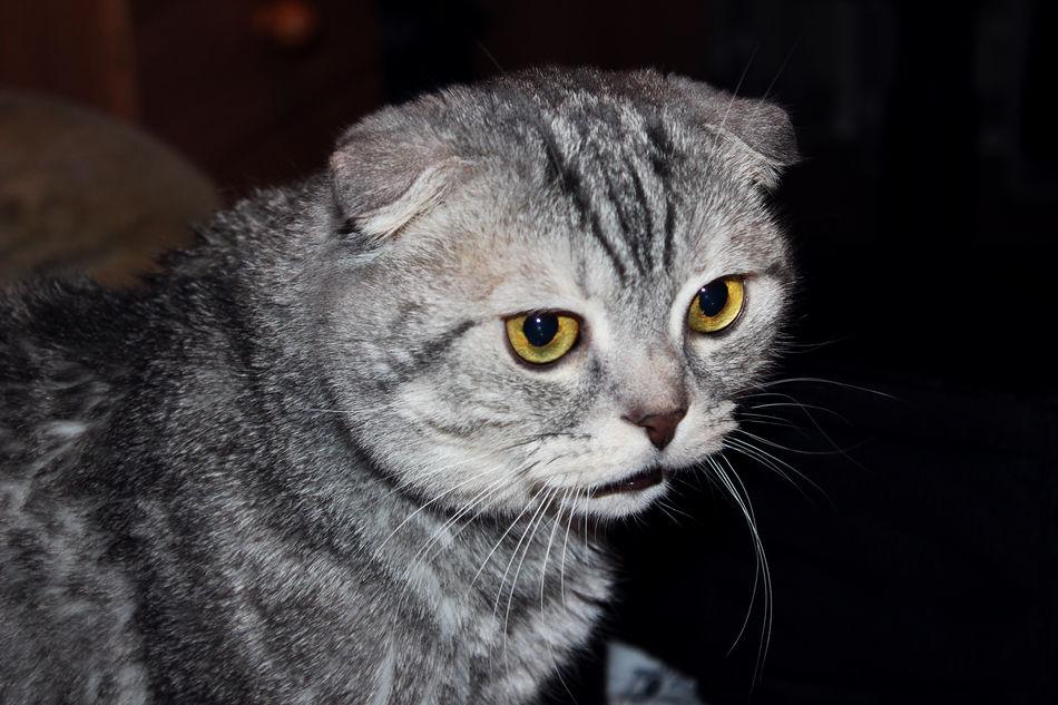 Cute Pets Cat Talking Cat
