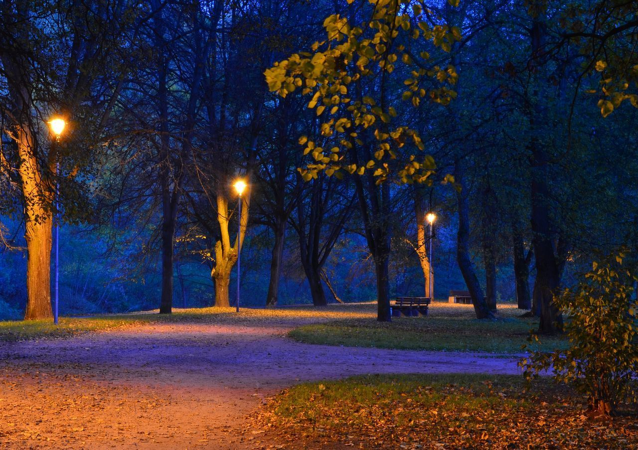 tree, night, tranquility, illuminated, nature, autumn, landscape, no people, bare tree, outdoors, scenics, beauty in nature, yellow, grass, sky