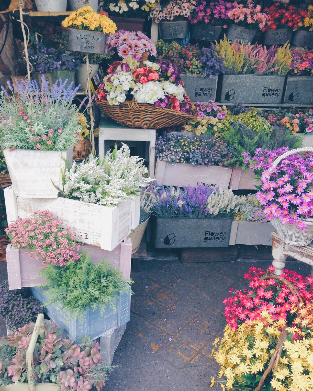 Flower Beauty In Nature Freshness Nature Flower Shop Multi Colored Flower Market Outdoors