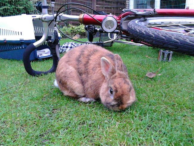Playing With The Animals Rabbit Mr Rabbit My Rabbit Bunny