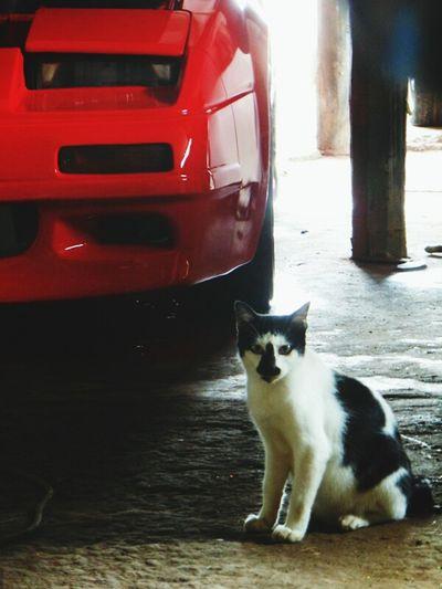 a cat & a car Cat Lovers Workshop Nissan Z