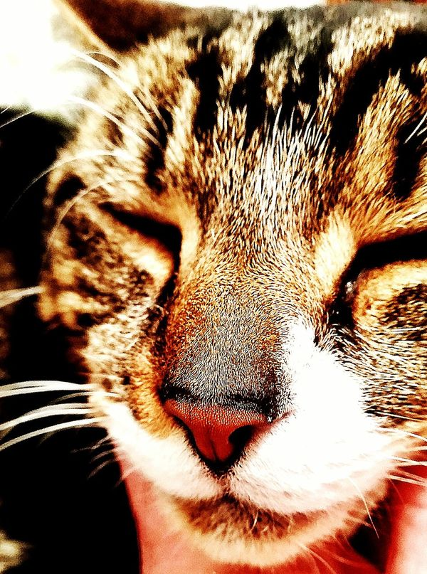 One Animal Domestic Animals Pets Animal Themes Domestic Cat Close-up Portrait Feline Whisker No People Indoors  Essex Unitedkingdom Canveyisland My Boy! Ninja Cat Besotted