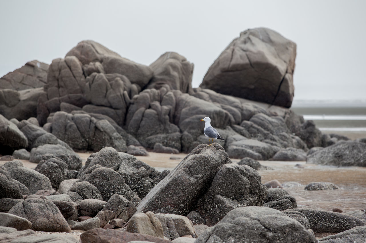 Beautiful stock photos of south korea, Animal Themes, Beach, Beak, Bird