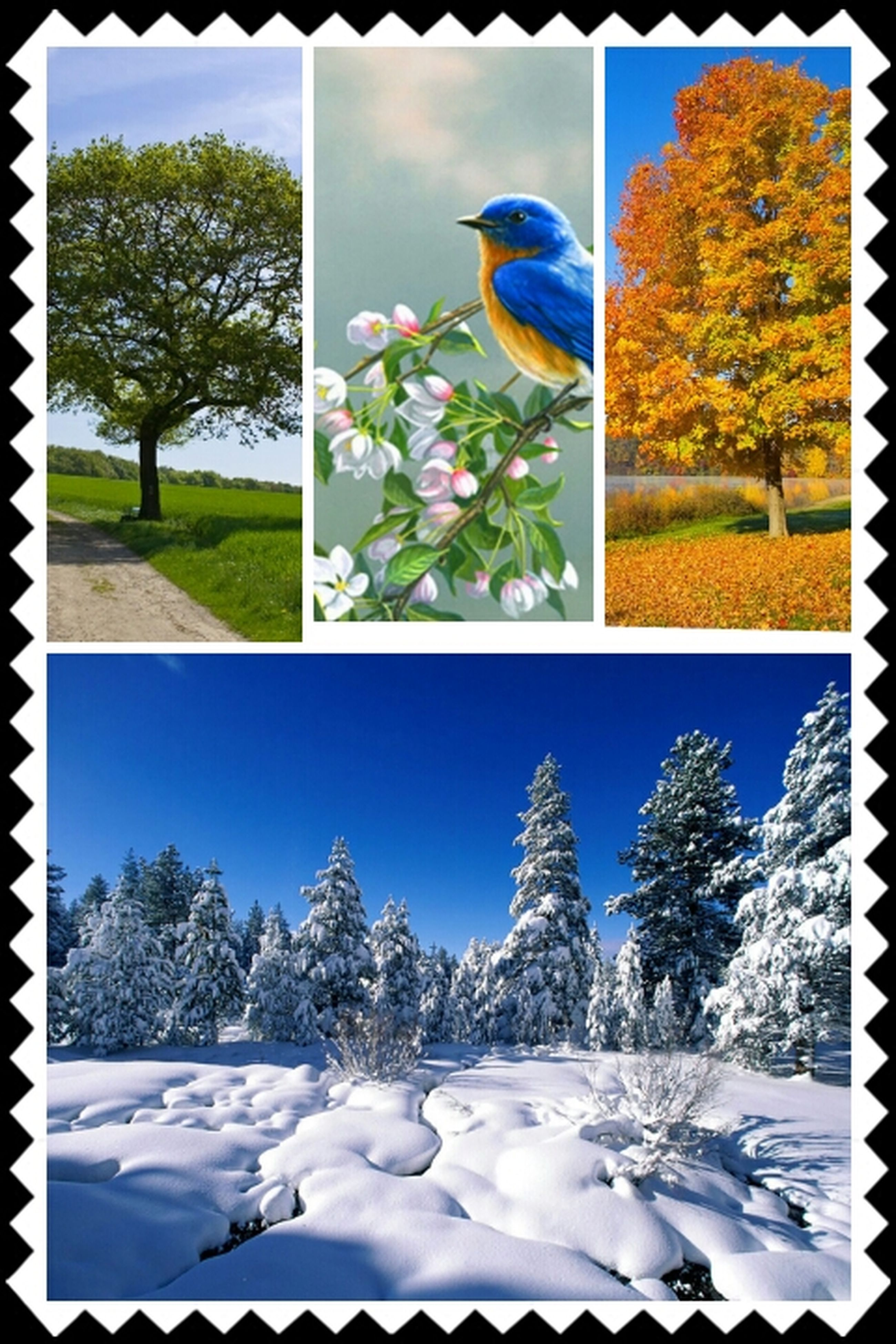 transfer print, auto post production filter, tree, flower, growth, plant, white color, window, nature, day, indoors, green color, park - man made space, blue, glass - material, sunlight, beauty in nature, no people, frame