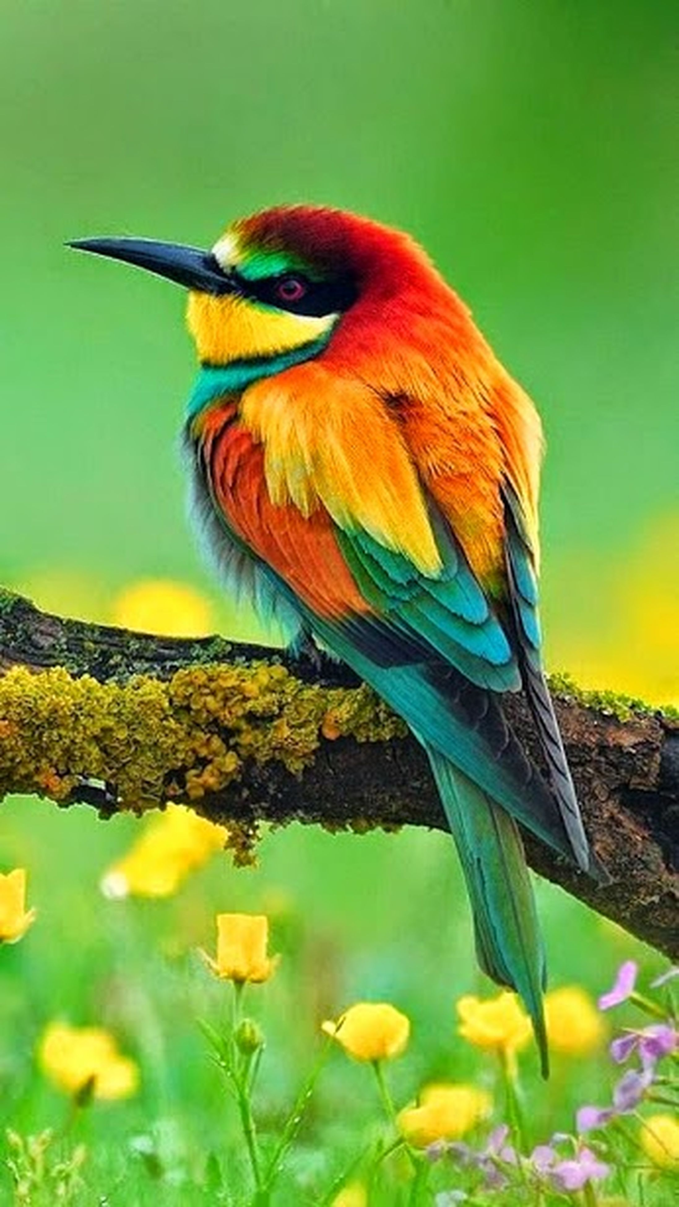 bird, animal themes, one animal, animals in the wild, wildlife, focus on foreground, perching, nature, close-up, beak, beauty in nature, orange color, yellow, no people, day, outdoors, branch, full length, multi colored, zoology