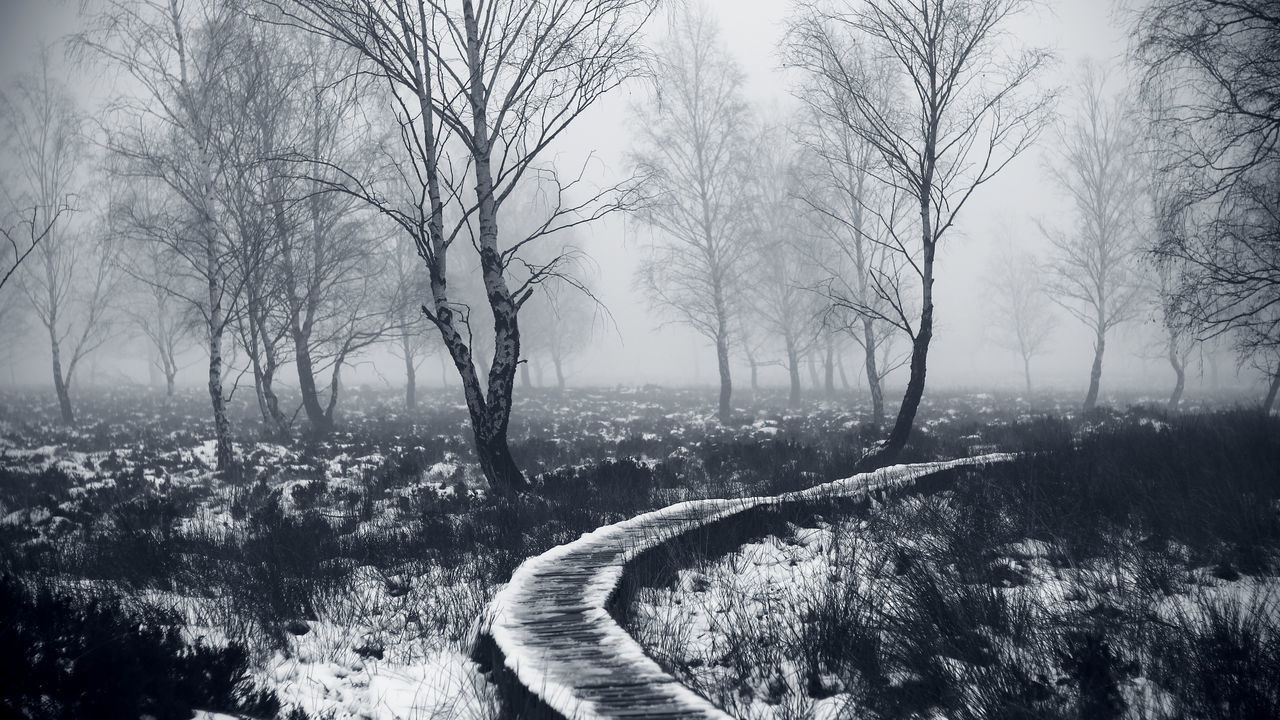 Auf dem Struffelt 16:9 Beauty In Nature Bw Day Eifel Fog Frost G Hautes Fagnes High Fens Hohes Venn Landscape Monochrome Monochrome Photography Natural Park Hohes Venn-Eifel Nature Nature Reserve No People Outdoors Plant Tranquil Scene Tranquility Tree Trees Winter