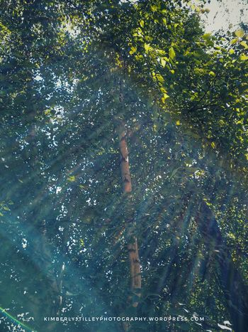 Sunflares around a Birch Tree. Outdoors Tree Nature Branch KimberlyJTilley Leaf Sunflares