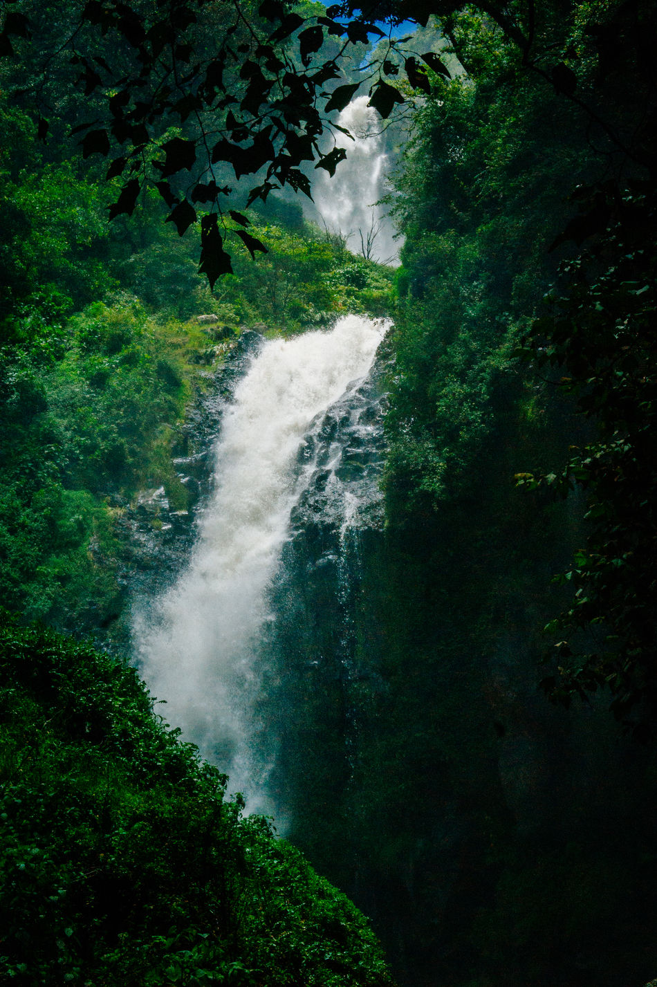 Beautiful stock photos of costa rica, Color Image, Day, Forest, Green