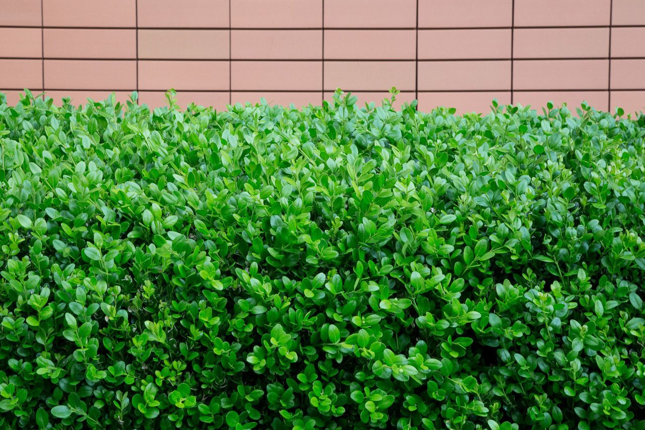 Beauty In Nature Day Green Green Color Growth Lush Foliage Nature Plant Plant Life