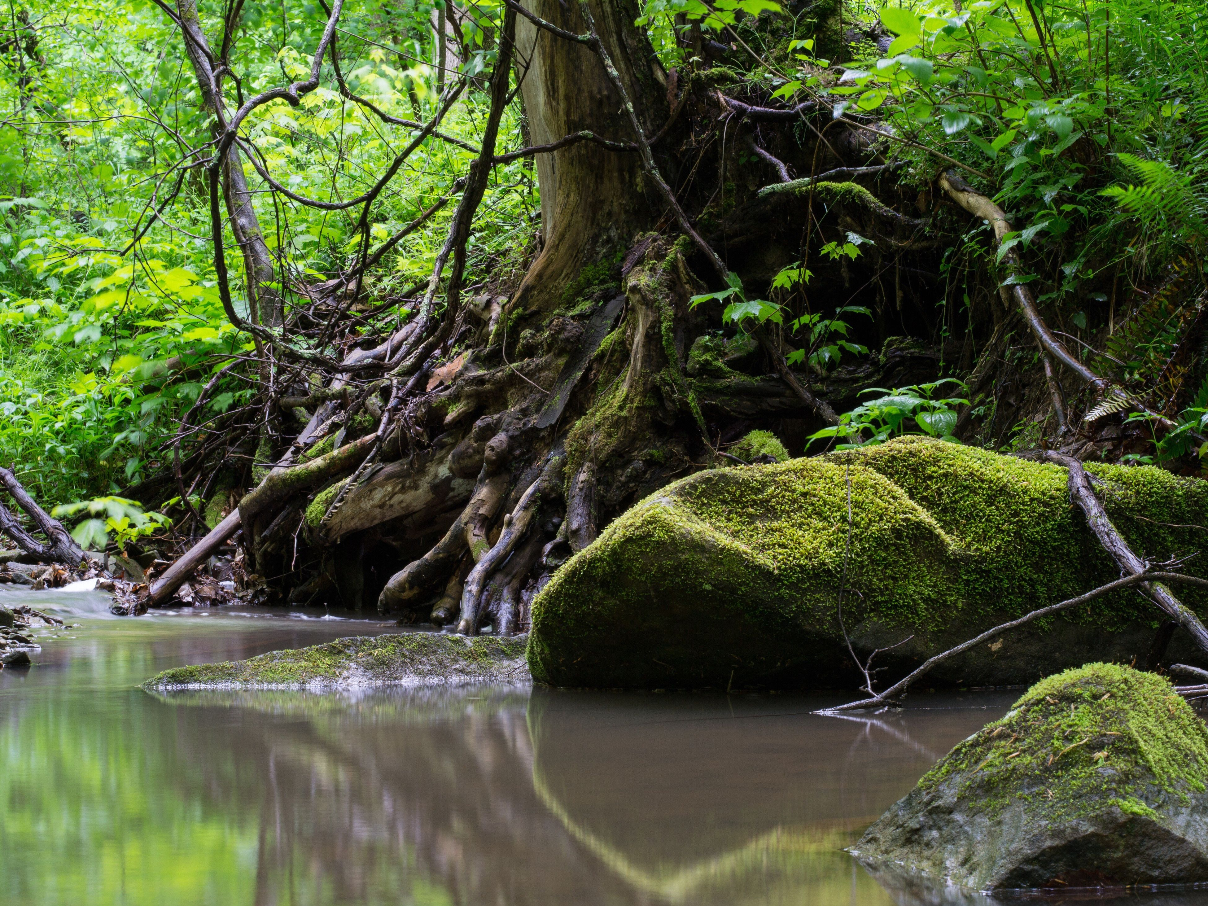 tree, nature, water, forest, green color, tranquility, tranquil scene, plant, outdoors, tree trunk, lake, scenics, growth, no people, beauty in nature, branch, landscape, day, freshness
