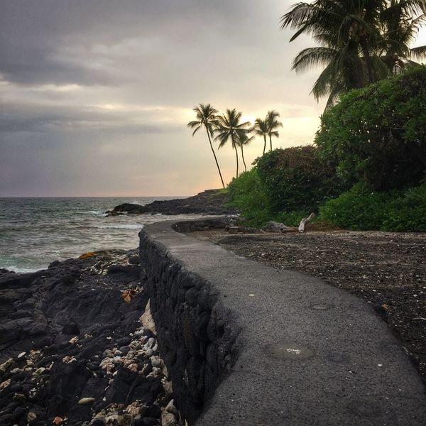 Palm Tree Tree Sky Sea Beach Nature No People Tranquil Scene Tranquility Scenics Cloud - Sky Water Beauty In Nature Horizon Over Water Outdoors Day Hawaii Kona Tropics Tropical Twilight