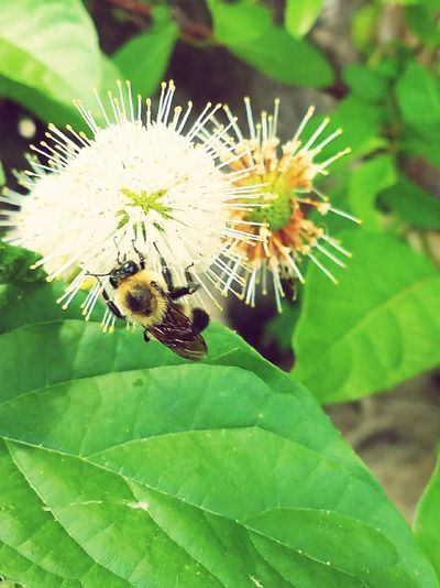 nature Bee Outdoors Pollination