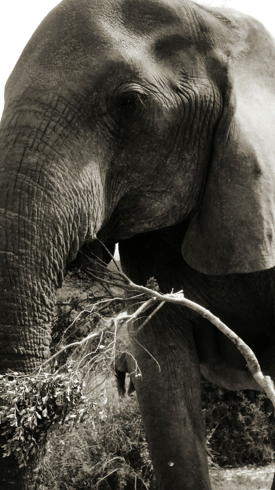 In memory of Hilton Crous Animal Wildlife Animals In The Wild Elephant Mammal One Animal No People Nature Outdoors Tusk Day Animal Trunk Animal Themes Beauty In Nature African Elephant Tree Water Close-up
