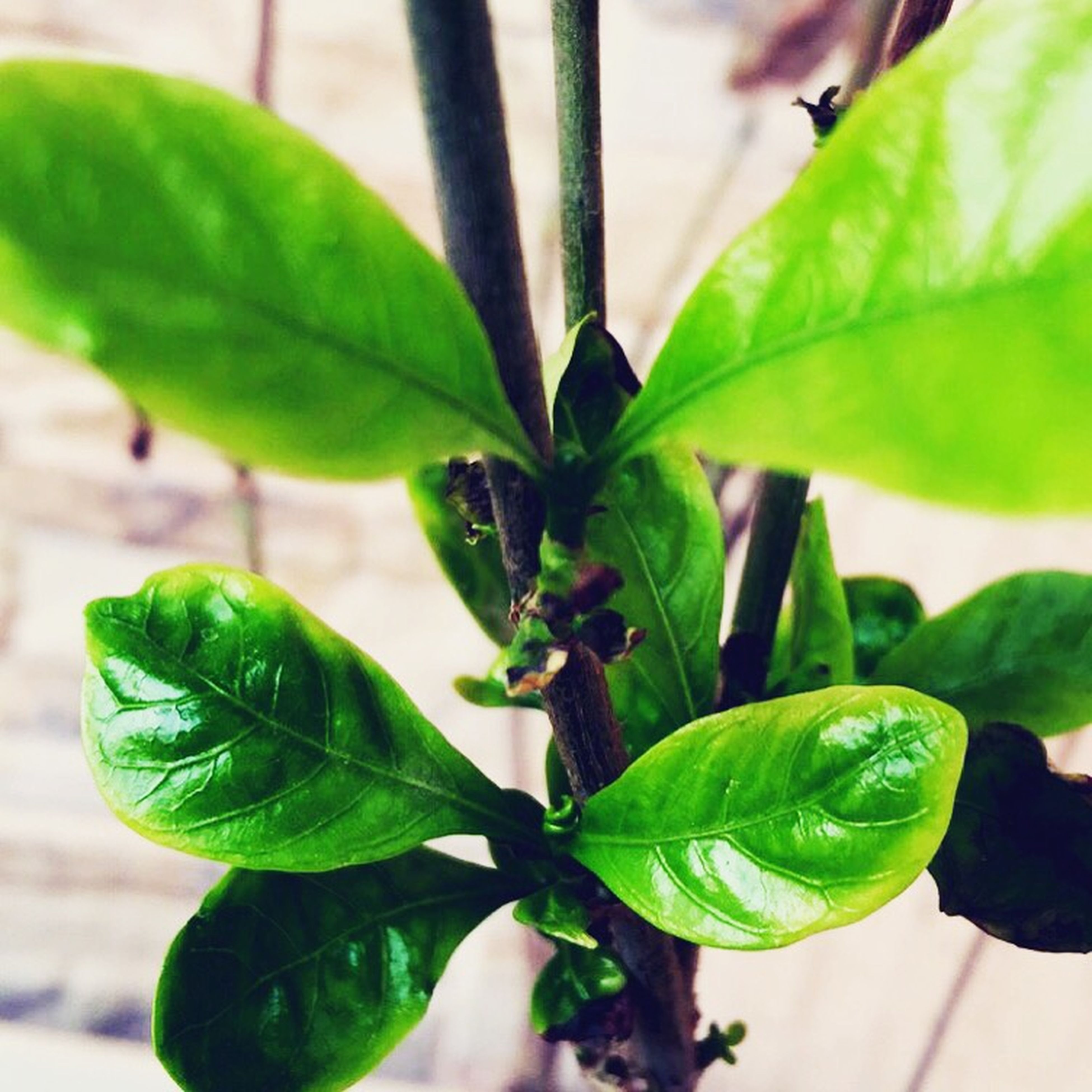 leaf, green color, plant, close-up, leaf vein, growth, focus on foreground, nature, freshness, green, beginnings, insect, leaves, selective focus, day, new life, outdoors, beauty in nature, stem, high angle view