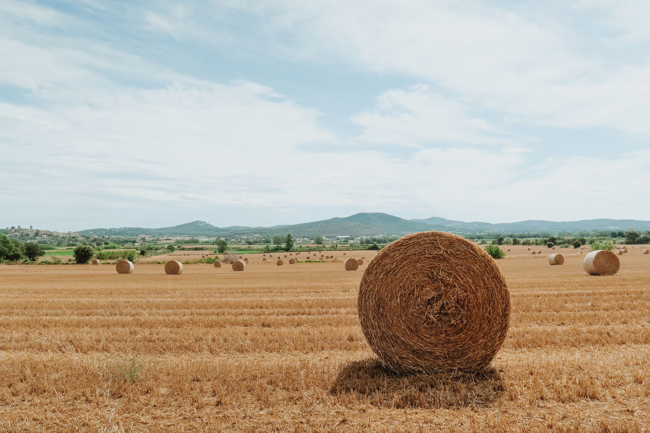Agriculture Bale  Beauty In Nature Crop  Day Farm Field Harvesting Hay Hay Bale Haystack Landscape Nature No People Outdoors Rolled Up Rural Scene Scenics Sky Tranquil Scene Tranquility