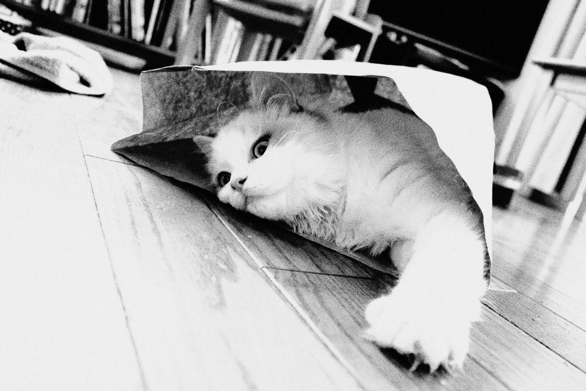 Catinabag Comic Style Ragdoll Monochrome Kitty