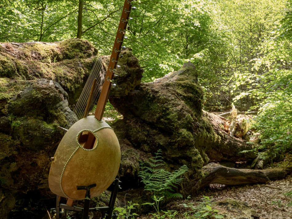 Sababurg-Project with Musician Klaus Latza: Kora Ancient Woodland Beauty In Decay Beauty In Nature Beauty In Nature Close-up Day Fallen Tree Forest Growth Kora Music Musical Instrument Nature No People Outdoors Tree Tree Trunk Tree Trunk Videoshooting WoodLand Working Hard