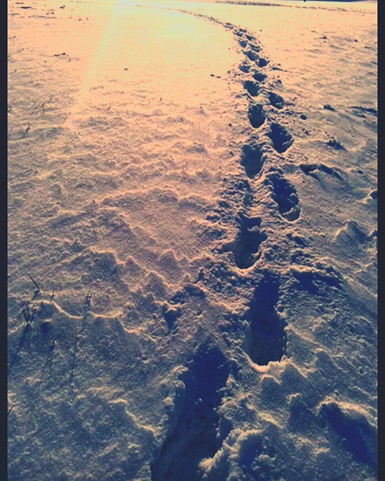 Made a heart in the snow Snow ❄ Sunlight ☀ Footprints In The Snow FootPrintsInTheSnow Footprints Half Of My Heart Snowsnowsnow.  Heart ❤ My Heart Six Inches Deep Snow