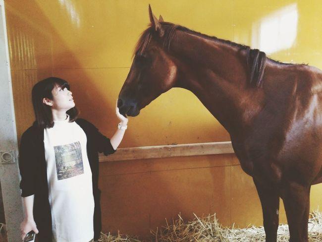 Horse <3 I Love Horses 馬 Memory