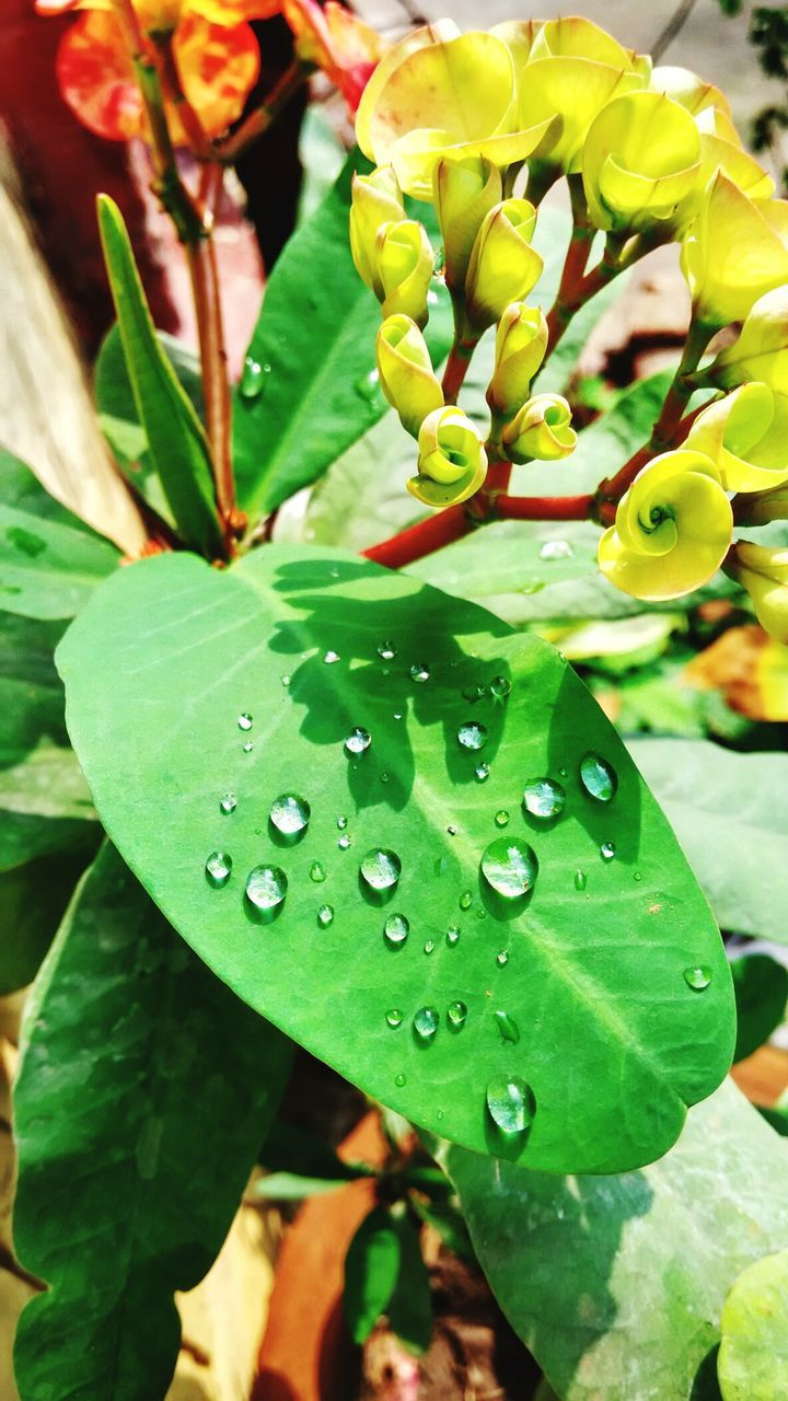green color, leaf, growth, nature, beauty in nature, freshness, plant, fragility, drop, close-up, day, outdoors, water, no people, wet, focus on foreground, flower, flower head