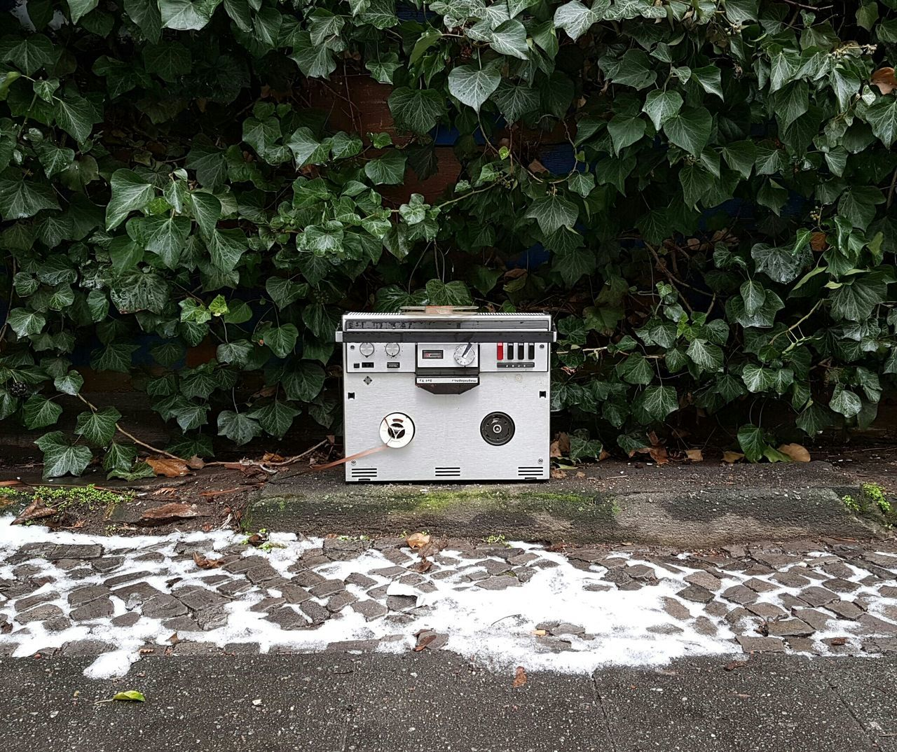 Cover Background Music Musical Equipment Music Equipment Found Object Found Old Musical Instrument Tape Recorder Tape Cassette Old Tape Music Tape Vintage Records & Tapes Street Found Streetphoto Recycling Music Industry Plant Wall Green Wall Green Plant Wall