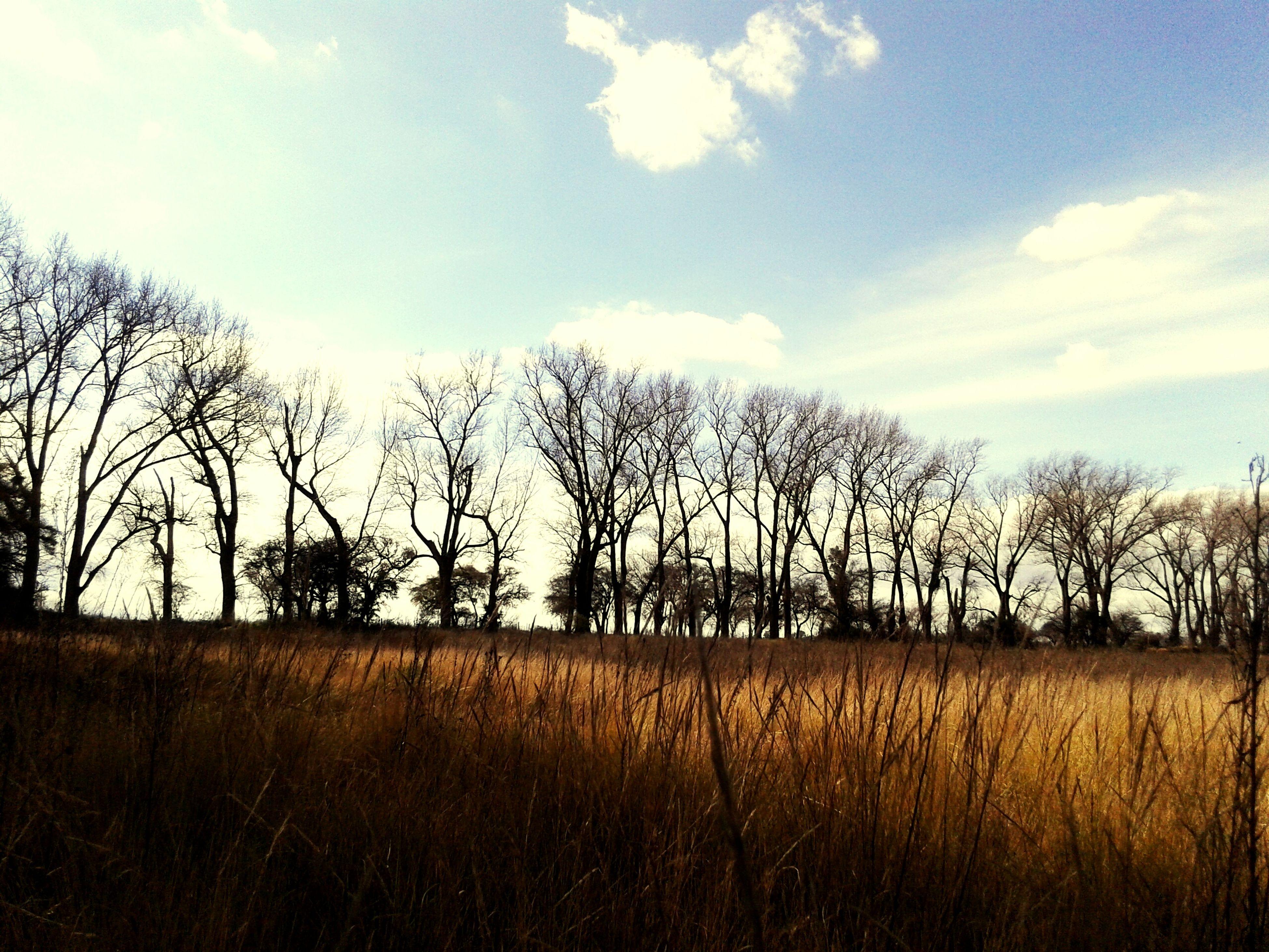 field, bare tree, sky, tree, landscape, tranquility, tranquil scene, rural scene, grass, scenics, nature, beauty in nature, growth, cloud - sky, cloud, horizon over land, blue, non-urban scene, grassy, no people, outdoors, remote, idyllic, day, non urban scene