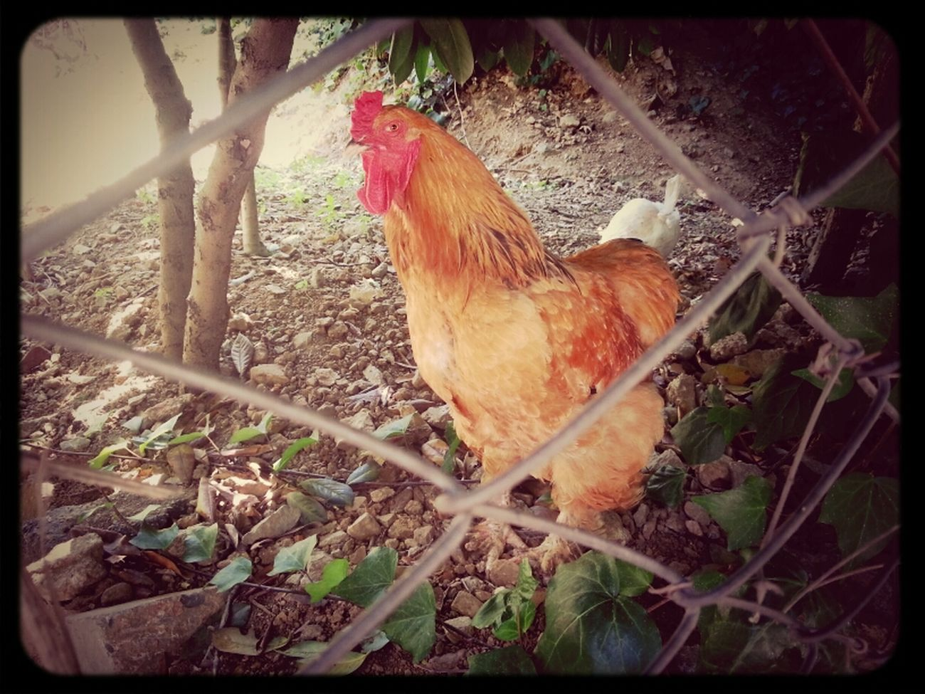 #alpha Bird