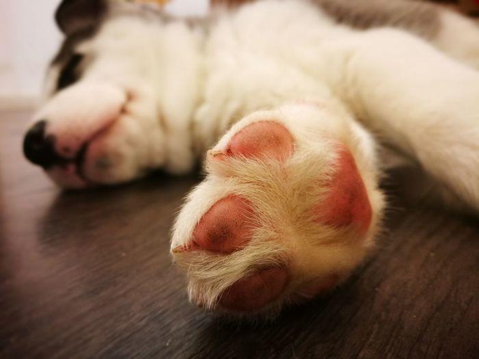 #sandragonphoto 📷 #HuaweiP9 #dog #cute #animal #sleep #nopeople #Pets #puppy Domestic Animals Paw No People Pets Animal Themes Dog One Animal Relaxation Sleeping Mammal