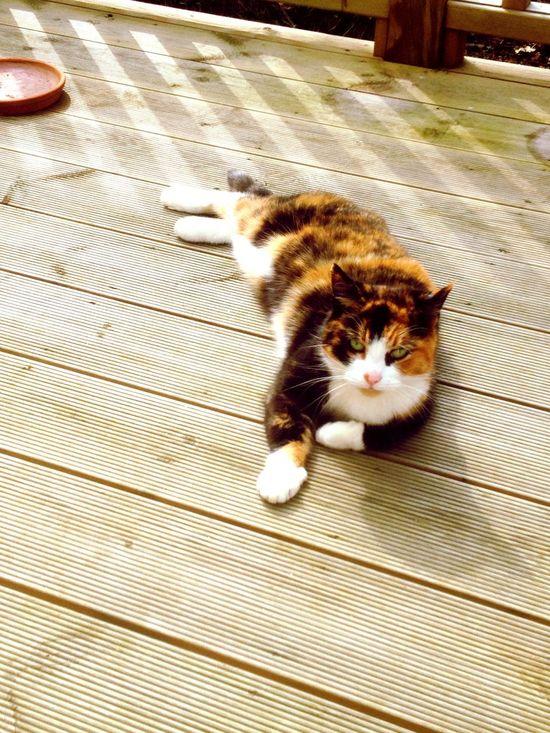 Tortoiseshell Cats . Enjoying the sunshine 😀😄❤️💞❤ ️ Cats Of EyeEm #family Pet