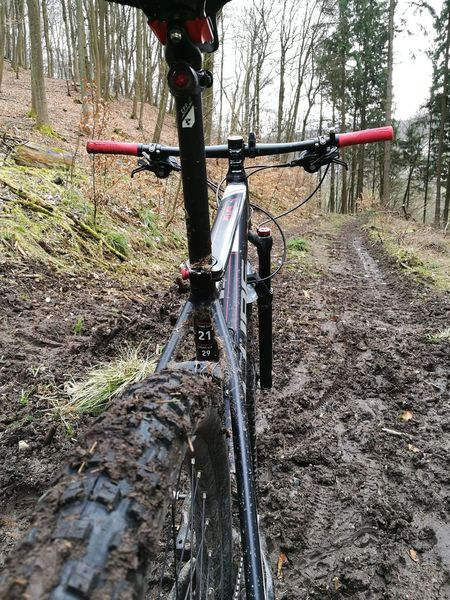 Tree The Way Forward Day Playground Outdoors No People Mtblife Geilerscheiß Cubebikes Ciclying Nature XC Bike