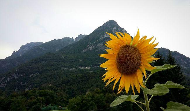 Girasole Mountain Mymountain Dolomiti Bellunesi Mis, Veneto Italy 43 Golden Moments