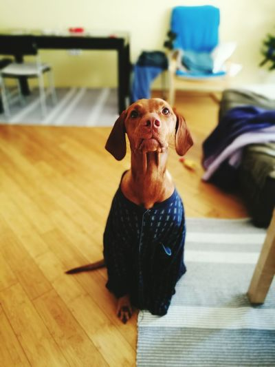 Family❤ Lu Love❤ Malibu Malilu Buba Misi Dogslife Dog Love Piko Dog Dogslove Vizsla Vizsla Life Vizslalove Vizslalife Vizsla Heart Pizama Pijamas Pijama ♥ EyeEmNewHere EyeEmNewHere
