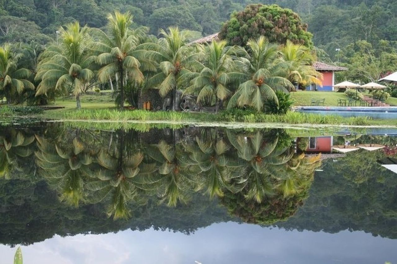 reflection, water, nature, palm tree, outdoors, day, symmetry, no people, green color, lake, waterfront, tree, sky, beauty in nature
