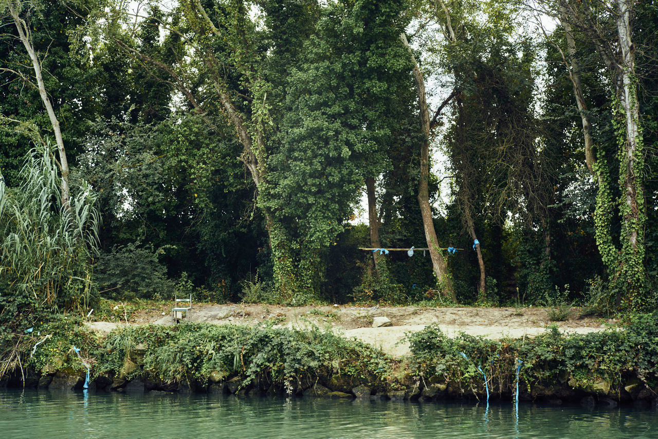 50mm Absence Chair Fiumicino Forest Garden Green Growth Isola Sacra Leica Lush Foliage Majestic No People Non-urban Scene Plant Remote River Roma Scenics Sony A7RII Summicron Tevere Tree Tree Trunk Waterfront
