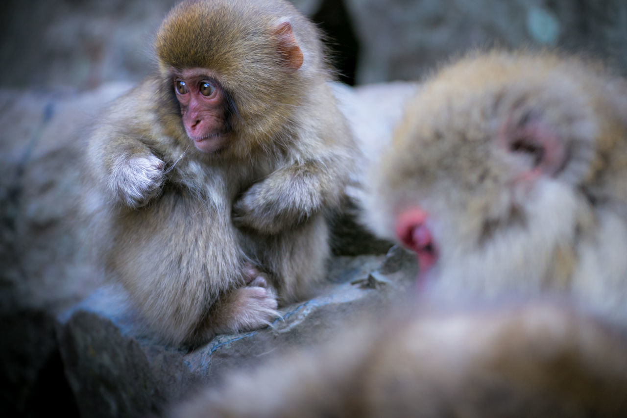 Beautiful stock photos of niedlich, Animal Themes, Animal Wildlife, Animals In The Wild, Close-Up
