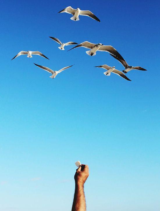 Seagulls Feeding  Birds Arm Blue Offering