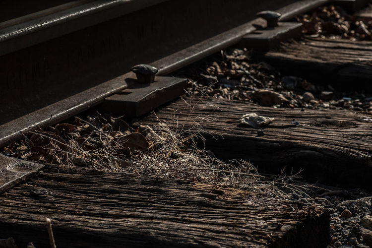 Abandoned Canadian National Railway Deteriorated I Love Trains Metal Metallic Old Old Railway Line Railroad Railroad Crossing Railroad Switch Railroad Ties Railroad Track Railroad Tracks Rusty Rustygoodness Showcase April This Week On Eyeem Ties Train Train Tracks Trains Trainspotting Vintage Worn Out