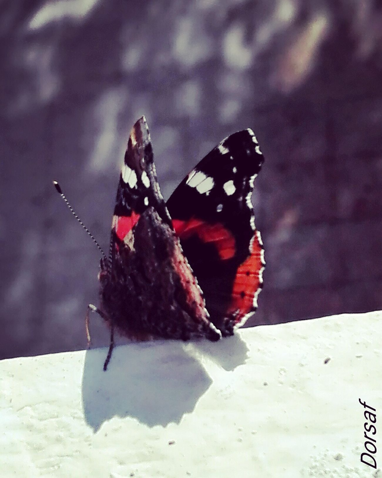 My Year My View Butterfly - Insect Nature Close-up Naturephotography Nature On Your Doorstep Naturebeauty Colorful Colours Of Nature December 2016 3XSPUnity