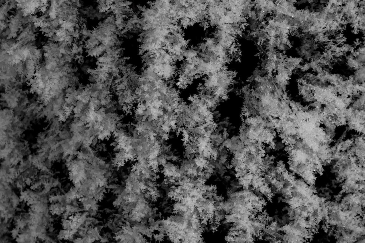 Eiskristalle an Maschendrahtzaun Chainlink Fence Cold Cold Temperature Cristal Frozen Ice Cristal Maschendrahtzaun Outdoors Power In Nature Snow Winter