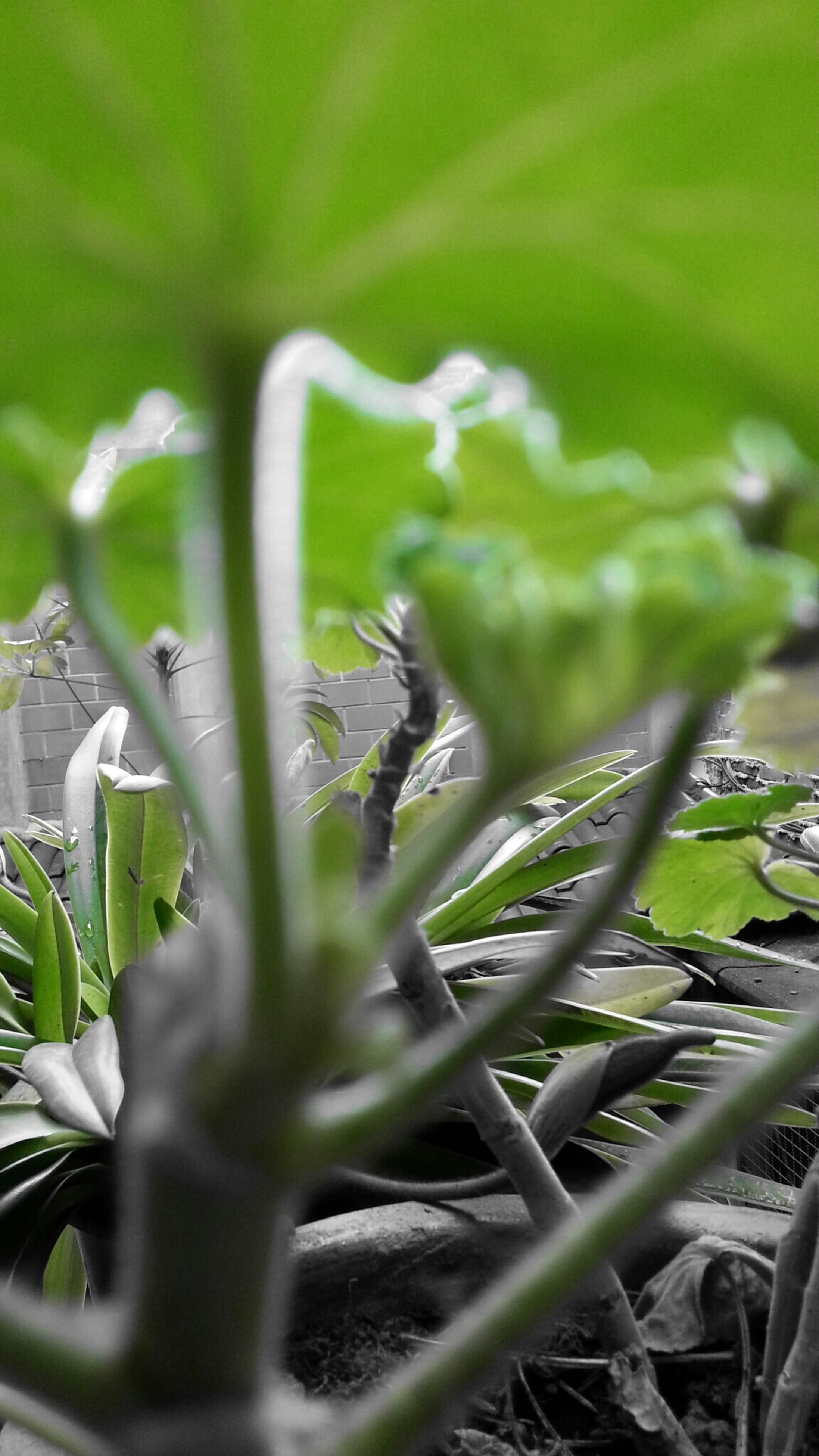 growth, plant, leaf, green color, nature, close-up, focus on foreground, beauty in nature, freshness, flower, selective focus, stem, growing, fragility, field, day, outdoors, white color, no people, tranquility