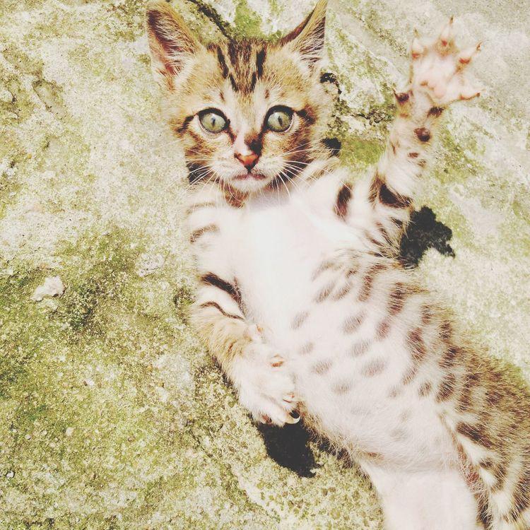 meow ネコ Cat かわよ  ネコ