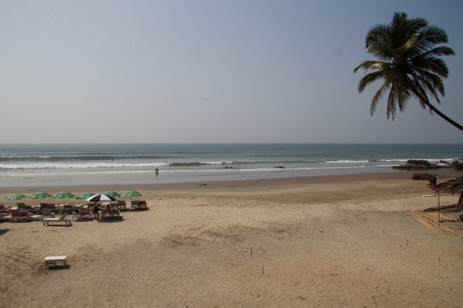Ashvem Ashvem Beach Beach Beach Life Beach Photography Beauty In Nature Goa Horizon Over Water India Landscape Nature No People North Goa Outdoors Palm Tree Sea Tropical Climate Tropical Paradise Vacations Water